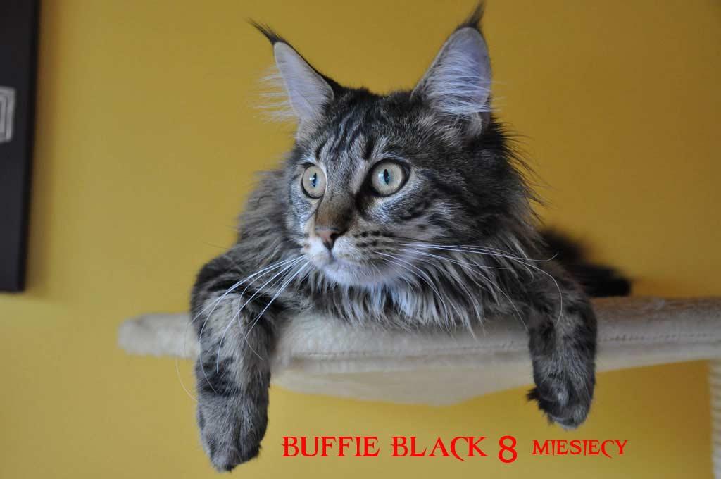 buffi8mcy.jpg