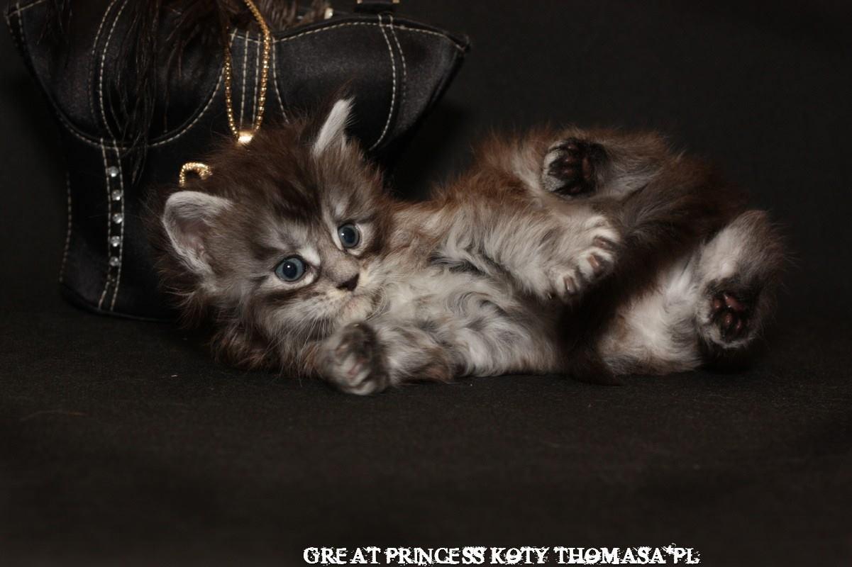princess112.jpg